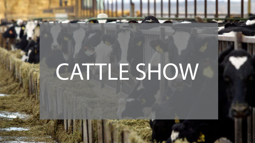 cattle-show